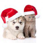 عکسهای بامزه سگ و گربه